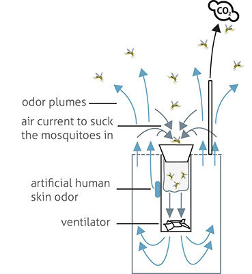 Biogents use a patented combination of attractive contrasts and air streams that are directed upwards. A mixture of human skin scents and carbon dioxide that is also patented increases the capture rate even further.