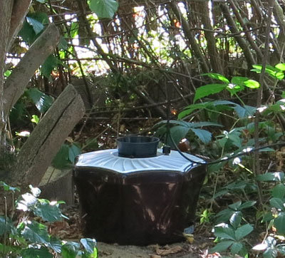 Shrubs and bushes are a good place to position the mosquito trap.
