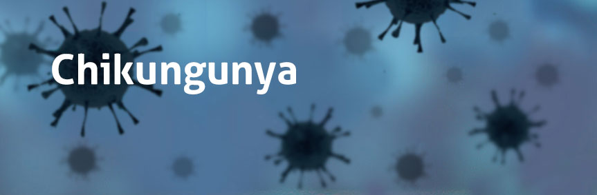 Chikungunya is a virus transmitted from human to human by the bite of infected mosquitoes, such as Aedes aegypti and Aedes albopictus.