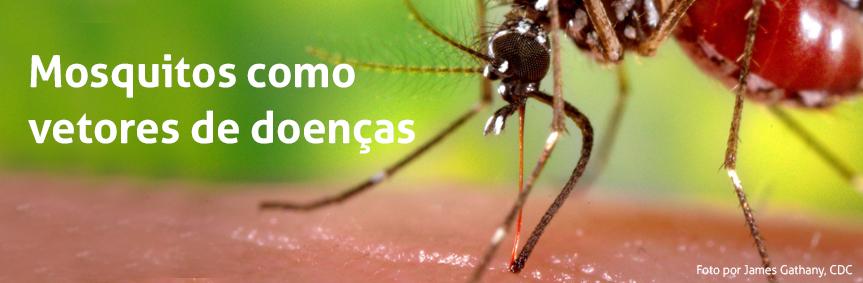 Mosquitos como vetores de doenças